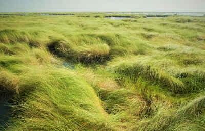 wetland-delineation-houston