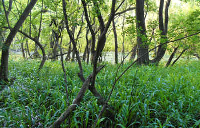 wetland-mitigation-monitoring-texas