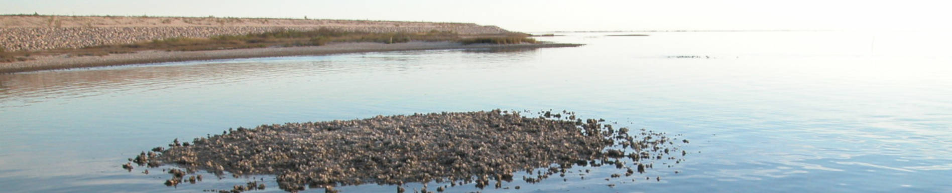 Oyster Reef Permit Evaluation Surveys